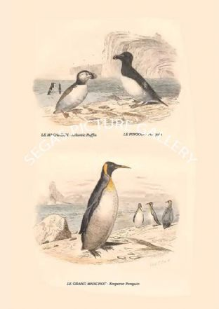 Atlantic Puffin, Penguin, Emperor Penguin